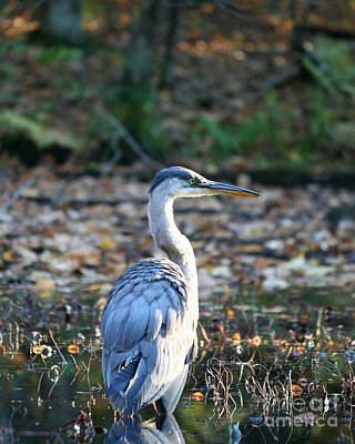 Herons Photograph - Autumn Great Blue Heron  by Neal Eslinger