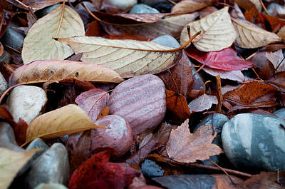 Photograph - Autumn Greatness by Gwyn Newcombe