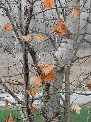 Photograph - Autumn Grey by Margaret McDermott