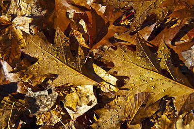 Photograph - Autumn Groundcover by Owen Weber