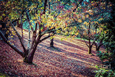 Photograph - Autumn Grove by Ray Warren