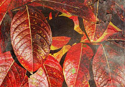 Photograph - Autumn Grunge  by Heidi Smith