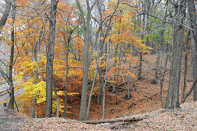 Photograph - Autumn Gully by Michael Porchik