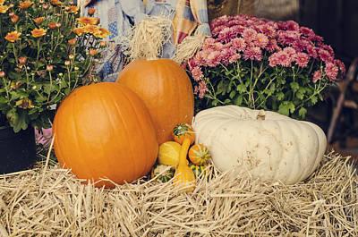Photograph - Autumn Harvest by Heather Applegate