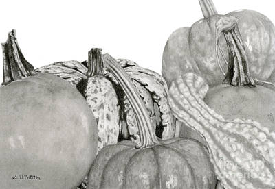 Squash Drawing - Autumn Harvest On White by Sarah Batalka
