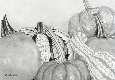 Squash Drawing - Autumn Harvest by Sarah Batalka