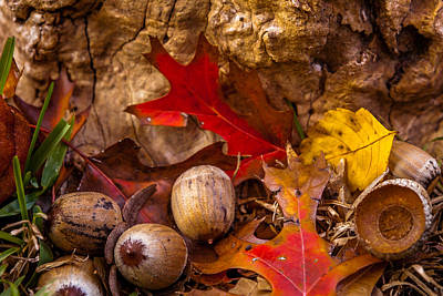 Photograph - Autumn Has Fallen by Melinda Ledsome