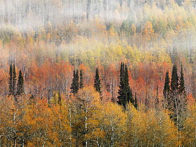 Photograph - Autumn Hillside by Leland D Howard