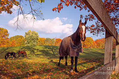 Photograph - Autumn Horse At The Fence by Barbara McMahon