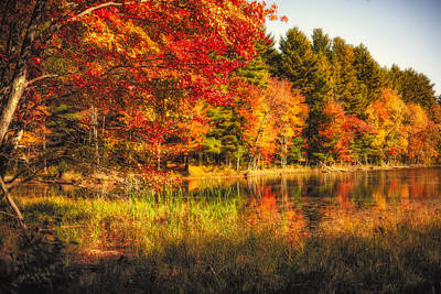 Photograph - Autumn Hot Mess by Robert Clifford