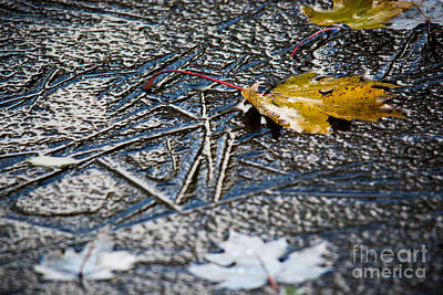 Photograph - Autumn Ice by Cheryl Baxter