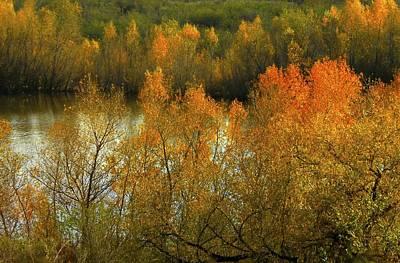 Autumn Ignites Art Print