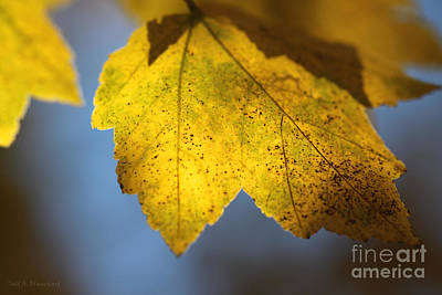 Photograph - Autumn No. 2 by Todd Blanchard