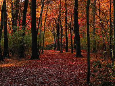 Photograph - Autumn IIi by Raymond Salani III