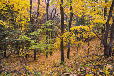 Photograph - Autumn Immersion by Bill Pevlor