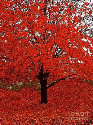 Photograph - Red Tree Impressions #1 Red by Saundra Myles