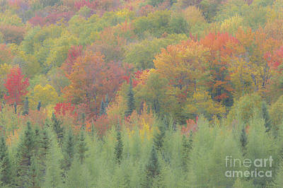 Photograph - Autumn Impressions by Alan L Graham
