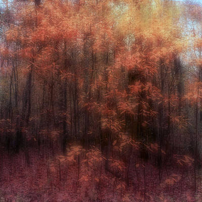 Photograph - Autumn Impressions by Louise Kumpf