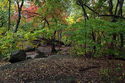 Photograph - Autumn In A Manhattan Wilderness by Cornelis Verwaal