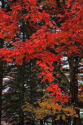 Autumn In Algonquin 3 Art Print