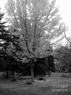 Recently Sold - Frank J Casella Royalty-Free and Rights-Managed Images - Autumn in Black and White by Frank J Casella