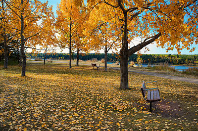 Photograph - Autumn In Calgary by Trever Miller