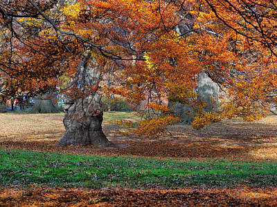 Photograph - Autumn In Central Park by Cornelis Verwaal