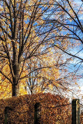 Photograph - Autumn In Chicago by Anthony Citro