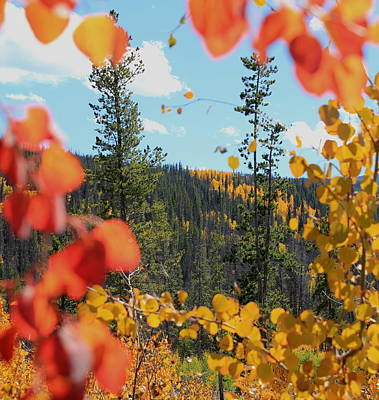Photograph - Autumn In Colorado by Trent Mallett