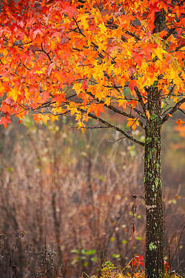 Photograph - Autumn In Connecticut by Karol Livote