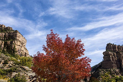 Photograph - Autumn In Glenwood Canyon - Colorado by Brian Harig