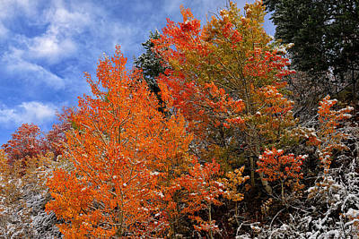 Photograph - Autumn In Idaho by Greg Norrell