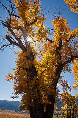 Photograph - Autumn In Lamar Valley In Yellowstone National Park by Fred Stearns