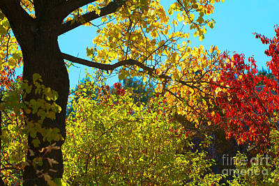 Photograph - Autumn In New Mexico by Martha Marks