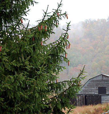 Photograph - Autumn In North Carolina by Linda Cox