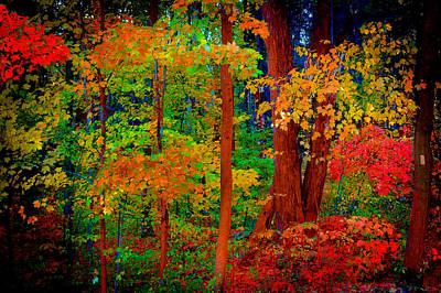 Photograph - Autumn In Ontario by Patrick Boening