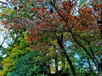 Autumn In Raleigh 009 Art Print by Lance Vaughn