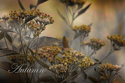 Photograph - Autumn In Sophie's Garden by HH Photography of Florida