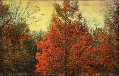 Autumn In Texas Art Print by Joan Bertucci