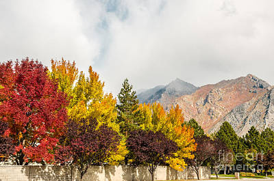 Photograph - Autumn In The City by Sue Smith