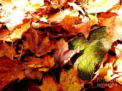 Photograph - Autumn In The Forest by Cristina Stefan