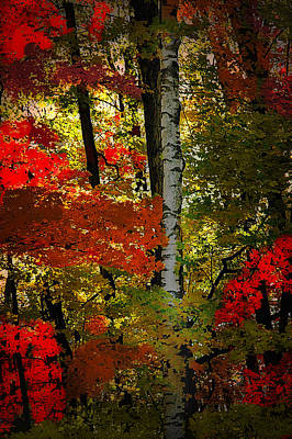Photograph - Autumn In The Forest by Patrick Boening