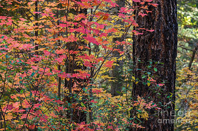 Photograph - Array Of Autumn Color by Tamara Becker