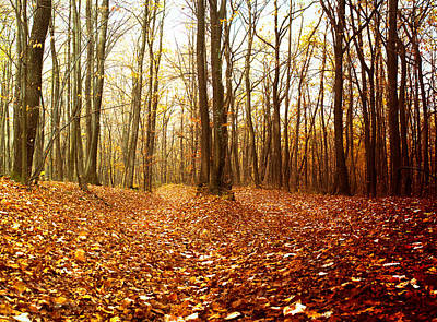 Photograph - Autumn In The Forest With Red And Yellow Leaves by Vlad Baciu