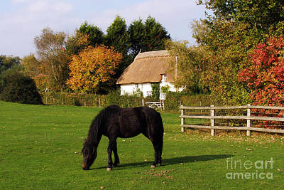 Photograph - Autumn In The New Forest by Terri Waters