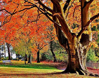 Photograph - Autumn In The Park by Benjamin Yeager