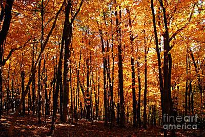 Photograph - Autumn In The Park by Larry Ricker