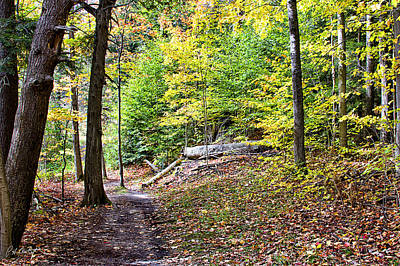 Autumn Photograph - Autumn In The Park by Phill Doherty