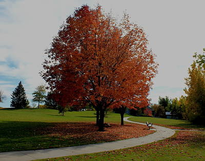 Photograph - Autumn In The Park by Trent Mallett