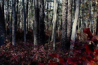 Autumn In The Pines Original